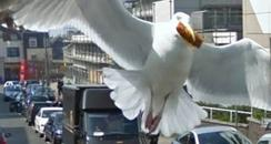 Seagull in John Street Brighton with half a wing
