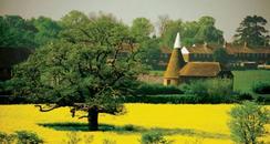 Kent Fields