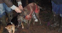 Dog Rescue Ferndown Dorset