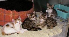 abandoned kittens