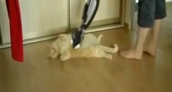Cat gets hoovered