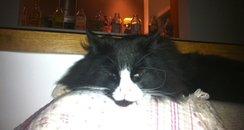 Lucy's naughty Cat
