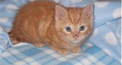 Macavity the kitten