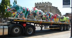 Go Rhinos Southampton