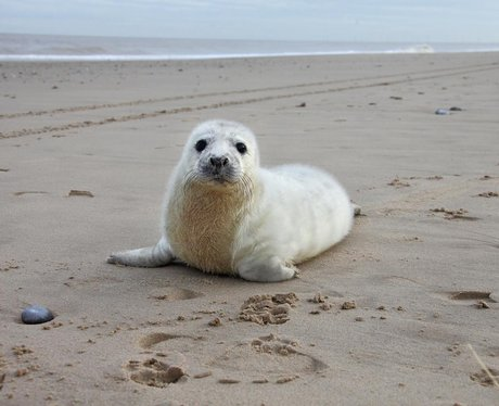 an orphaned seal pup on a beach