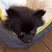 Image 5: A fluffy black puppy in it's bed