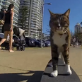 Cat on a skateboard