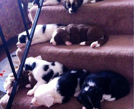 A litter of puppies sleeping on stars