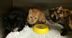 Abandoned Cats, Harwich