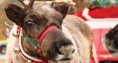 Christchurch Christmas Festival