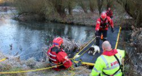 Avon firefighters rescue dog from frozen pond