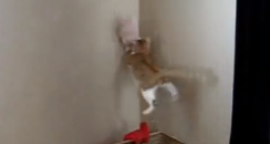 kitten jumping up