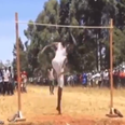 high jumper video