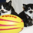 kittens Southampton rugby world cup