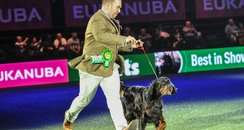 Crufts James Gordon Setter