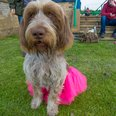 Race for Life Norwich 2016 Dashing Dogs