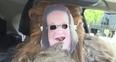 chewbacca wears chewbacca mum mask