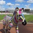 Marwell Zany Zebra Ageas Bowl