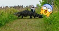 alligator video canvas