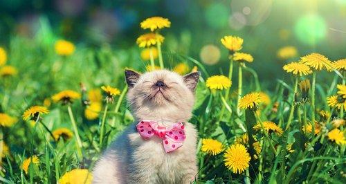 Spring Pet Selfie