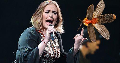 Adele Bug Stage Invasion