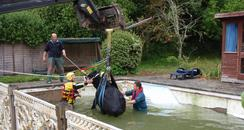 Cow rescued from swimming pool